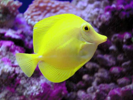 желтый и пурпурный в природе