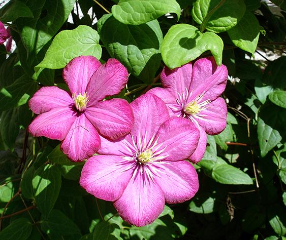 сочетание пурпурного и зеленого в природе