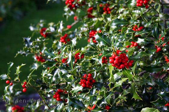 зеленый и красный в природе