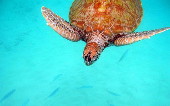 бирюзовый и коралловый в природе